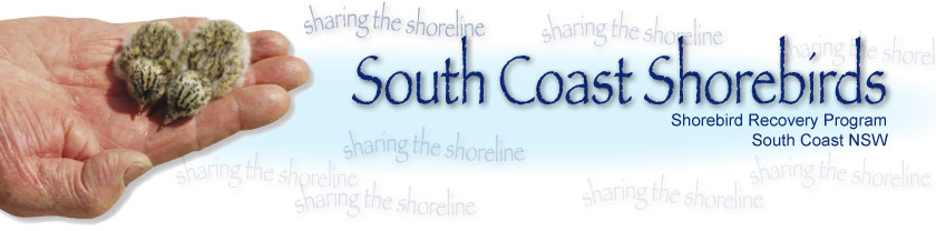shorebird recovery program nsw south coast