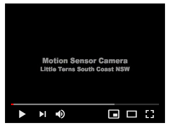 Motion Sensor Camera Video Mogareka
