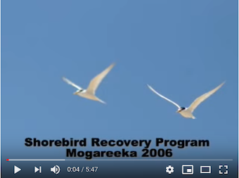 Recovery Program Overview Video